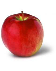 Cortland Apple Tree