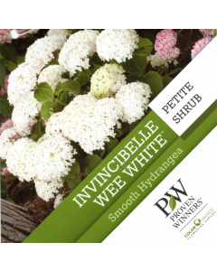 Invincibelle Wee White Hydrang