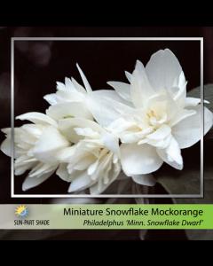Miniature Snowflake Mock 2G