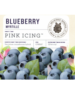 Pick Icing Blueberry