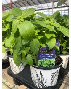Basil - Small Leaf