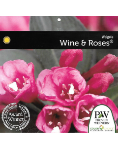 Wine & Roses Weigela