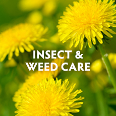 Insect & Weed Care